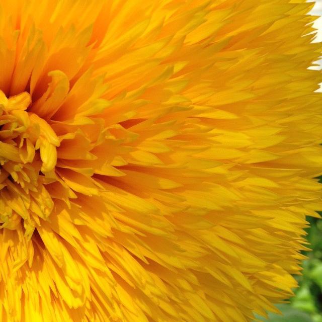 La gentilezza amorevole. Lettura del gruppo di Mindfulness di martedì 27 gennaio 2015.