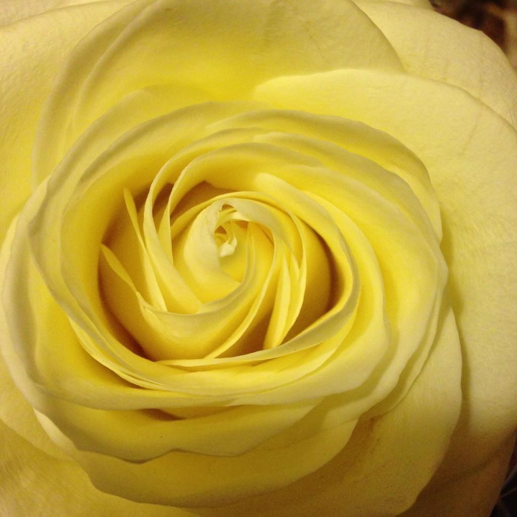 Discorso sulla gentilezza amorevole. Lettura del gruppo di Mindfulness di martedì 13 gennaio 2015